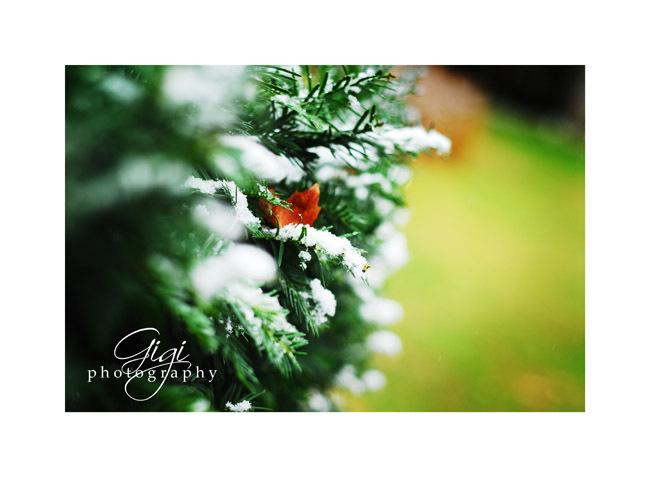 Winterbush
